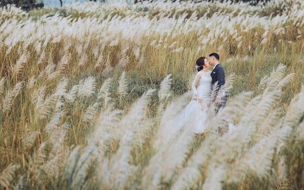 Cánh đồng cỏ lau cũng là địa điểm chụp ảnh cưới đẹp