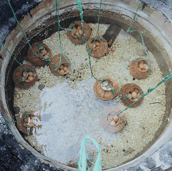 Trứng được luộc trong giếng nước nóng