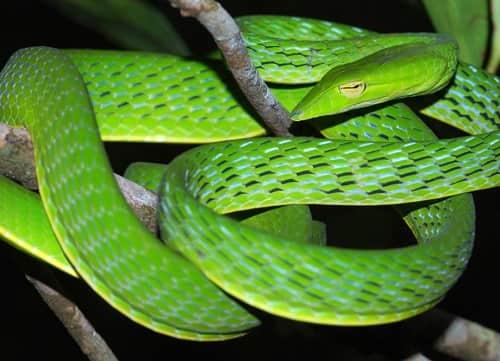Mơ thấy rắn xanh báo hiệu điềm xấu
